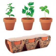 3 potes de terracota de barro com  três ervas diferentes: hortelã, salsa e manjericão- FLOWERPOT